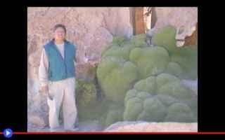 piante  creature  sudamerica  atacama