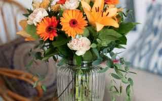 Giardinaggio: fiori  regalo