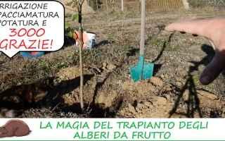 Giardinaggio: alberi  orto  campagna