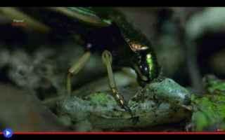 Animali: animali  insetti  predatori  carnivori