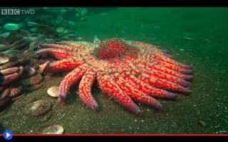 animali  echinodermi  stelle marine