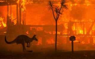 Ambiente: australia  incendi  koala  canguro