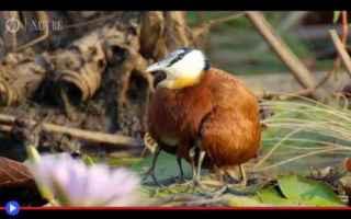 Animali: animali  uccelli  palude  okavango