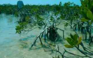 mud  ambiente  rifiuti  modello