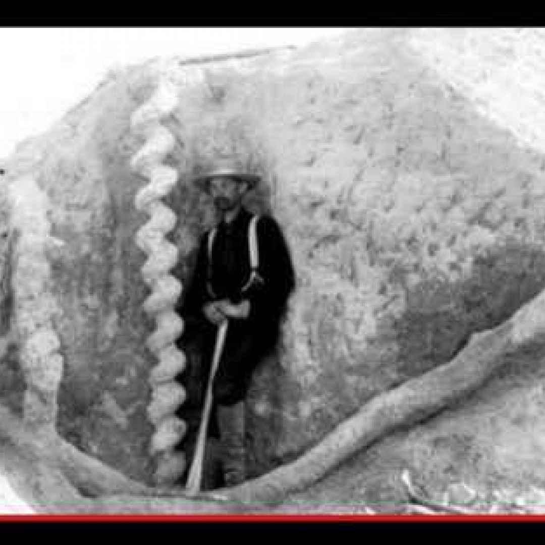 fossili  ritrovamenti  preistoria  usa