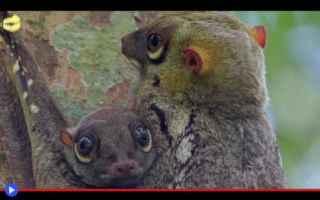Animali: animali  creature  lemuri  scoiattoli