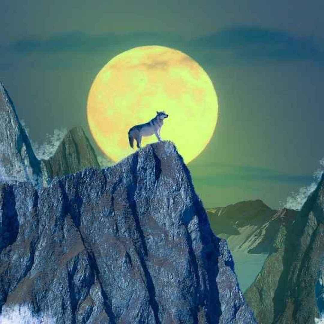coyote  creazione dell'uomo  indiani
