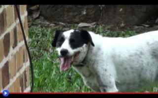 Animali: animali  rospi  cani  anuri  anfibi