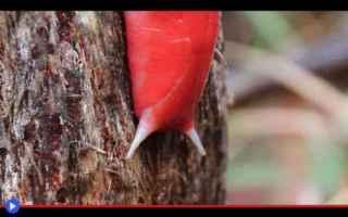 natura  pericolo  conservazione  pioggia