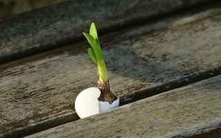 Giardinaggio: giardinaggio  orto  uovo