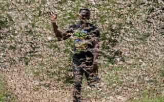 Animali: locuste  medioriente  africa