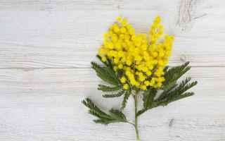https://diggita.com/modules/auto_thumb/2020/03/05/1651626_mimosa-festa-della-donna_thumb.jpg