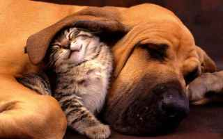 Animali: cani  gatti  coronavirus