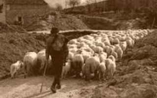 management  leadership  sheepdog