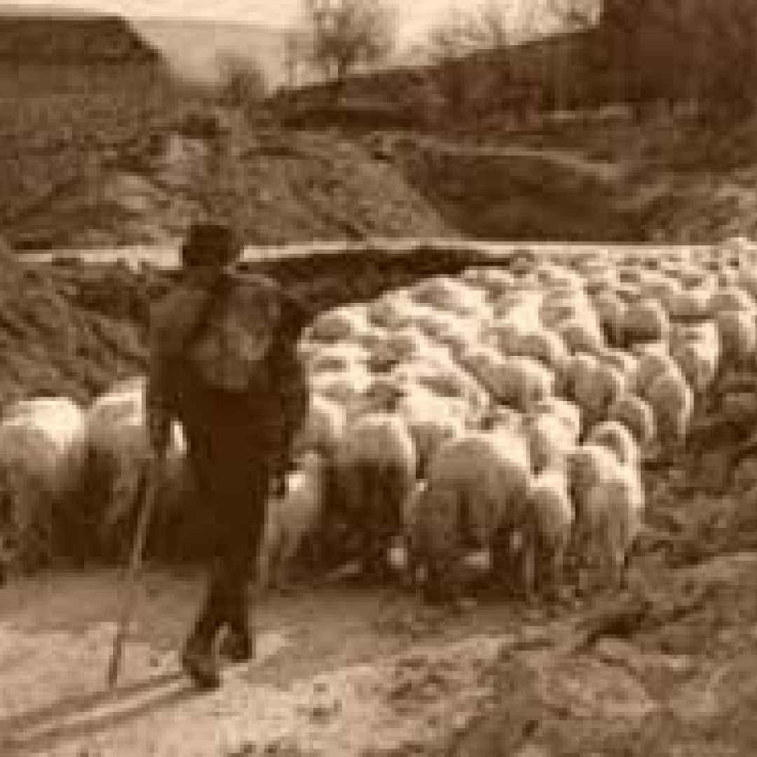 management  leadership  sheepdog