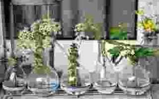 Design: vasi di fiori  vasi  fiori