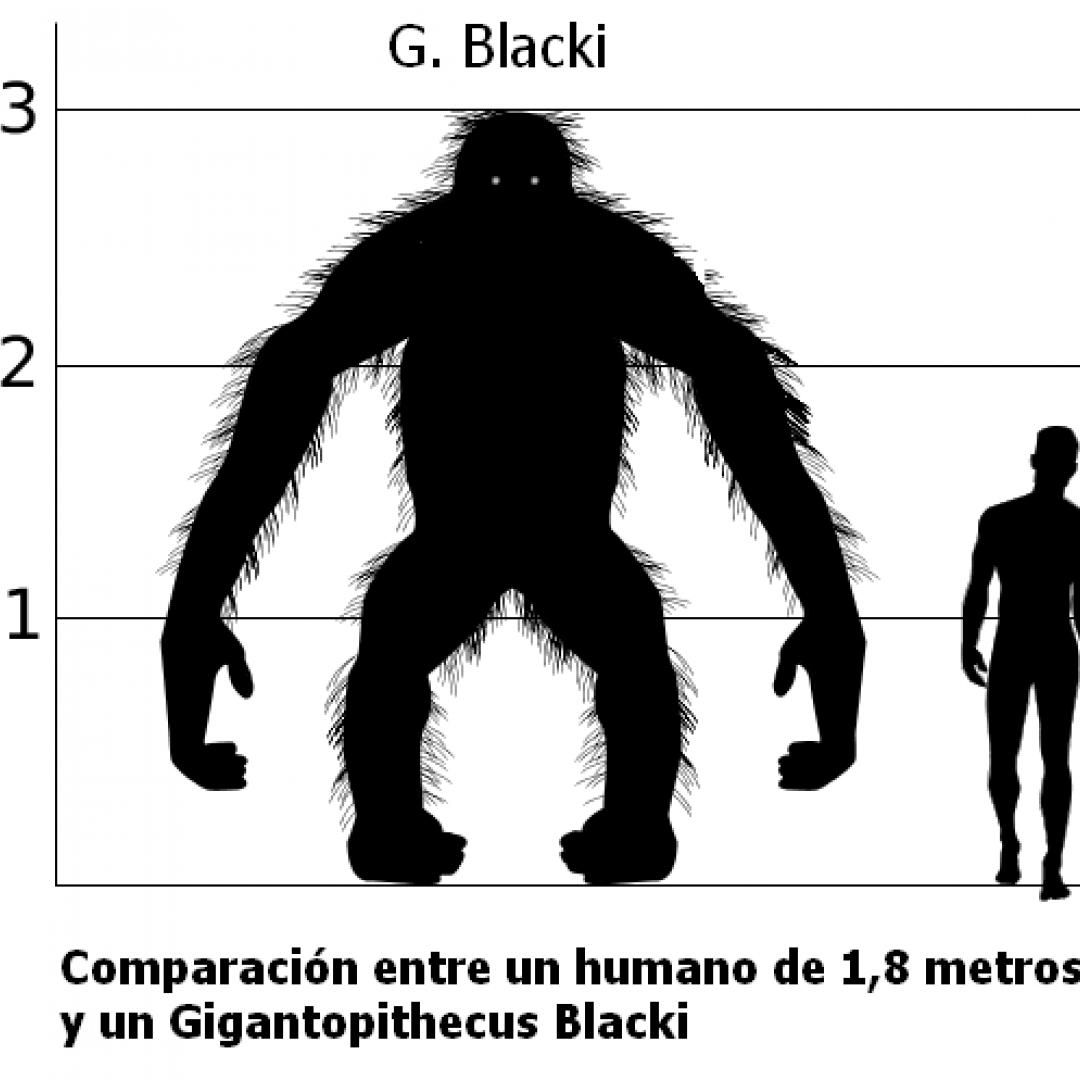 gigantopitecus  paleontologia
