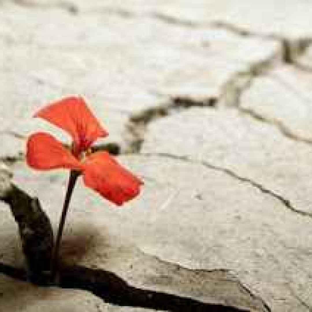 resistenza  resilienza