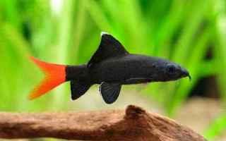 Animali: rettili  mondo  pesci  acquario