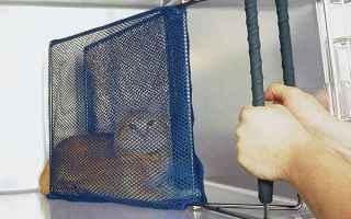 veterinaria  gatti  aggressività