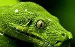 Psiche: serpenti  sogni  significato