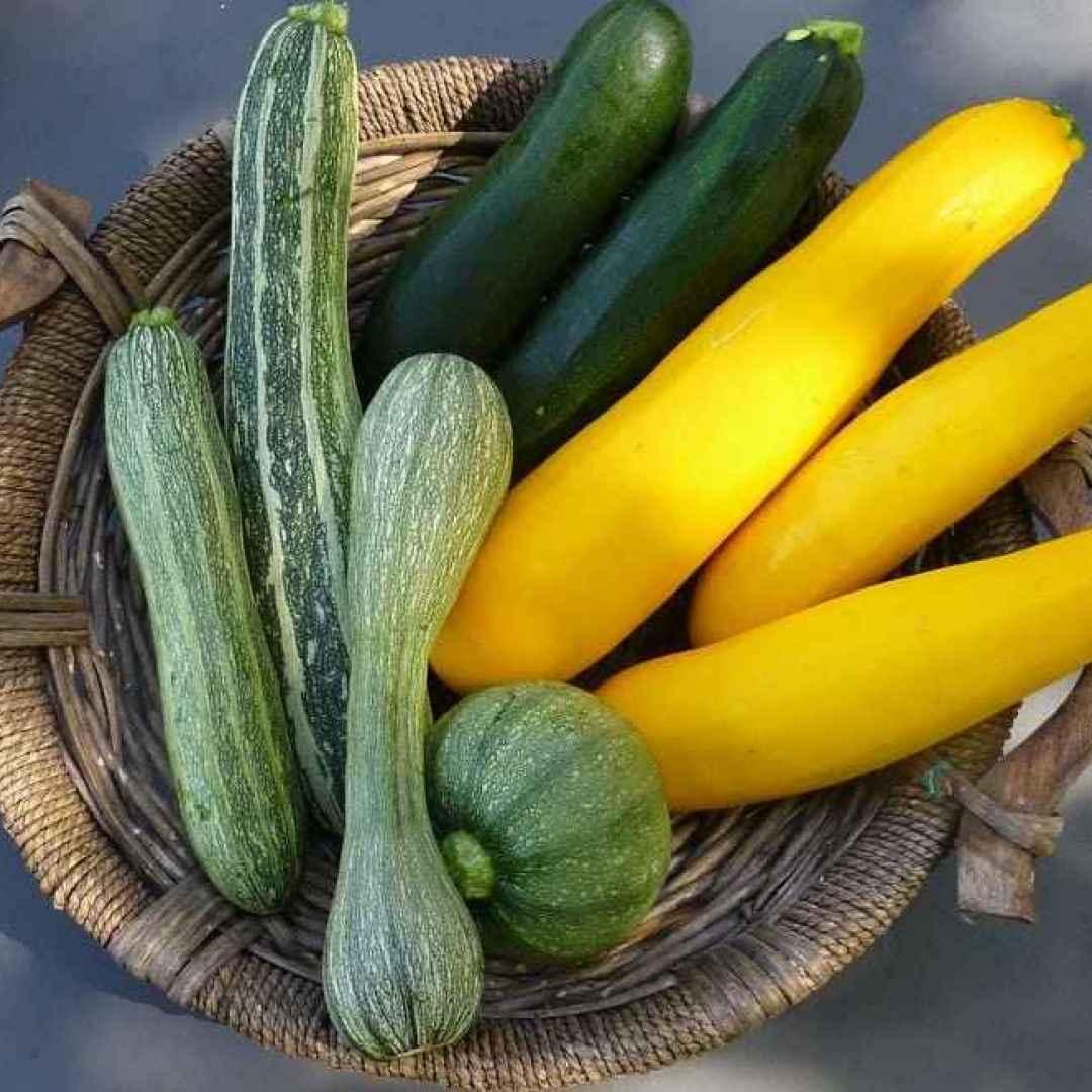 seminare semina zucchine
