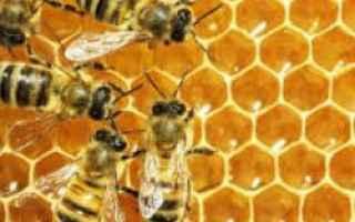 Psiche: api  sogni  puntura insetti  significato