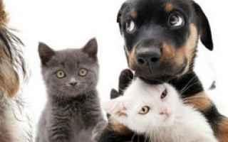 Psiche: cani che mordono  sogni  significato