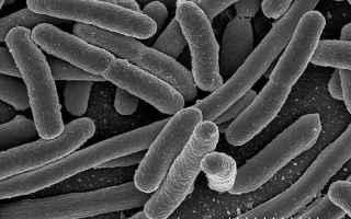Alimentazione: agricoltura  alimenti transgenici  ogm