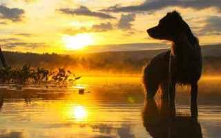 Animali: cani  storie dal mondo  storie di cani