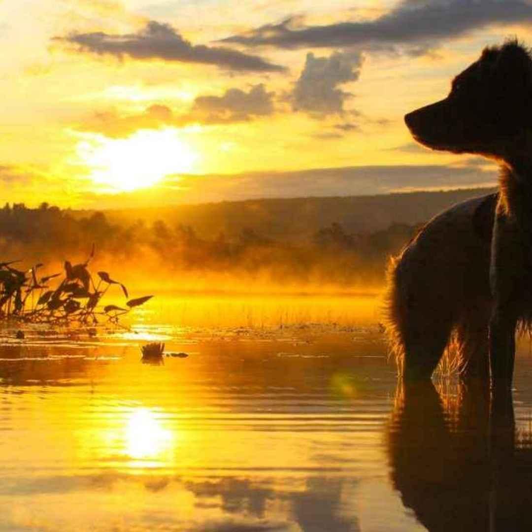 cani  storie dal mondo  storie di cani