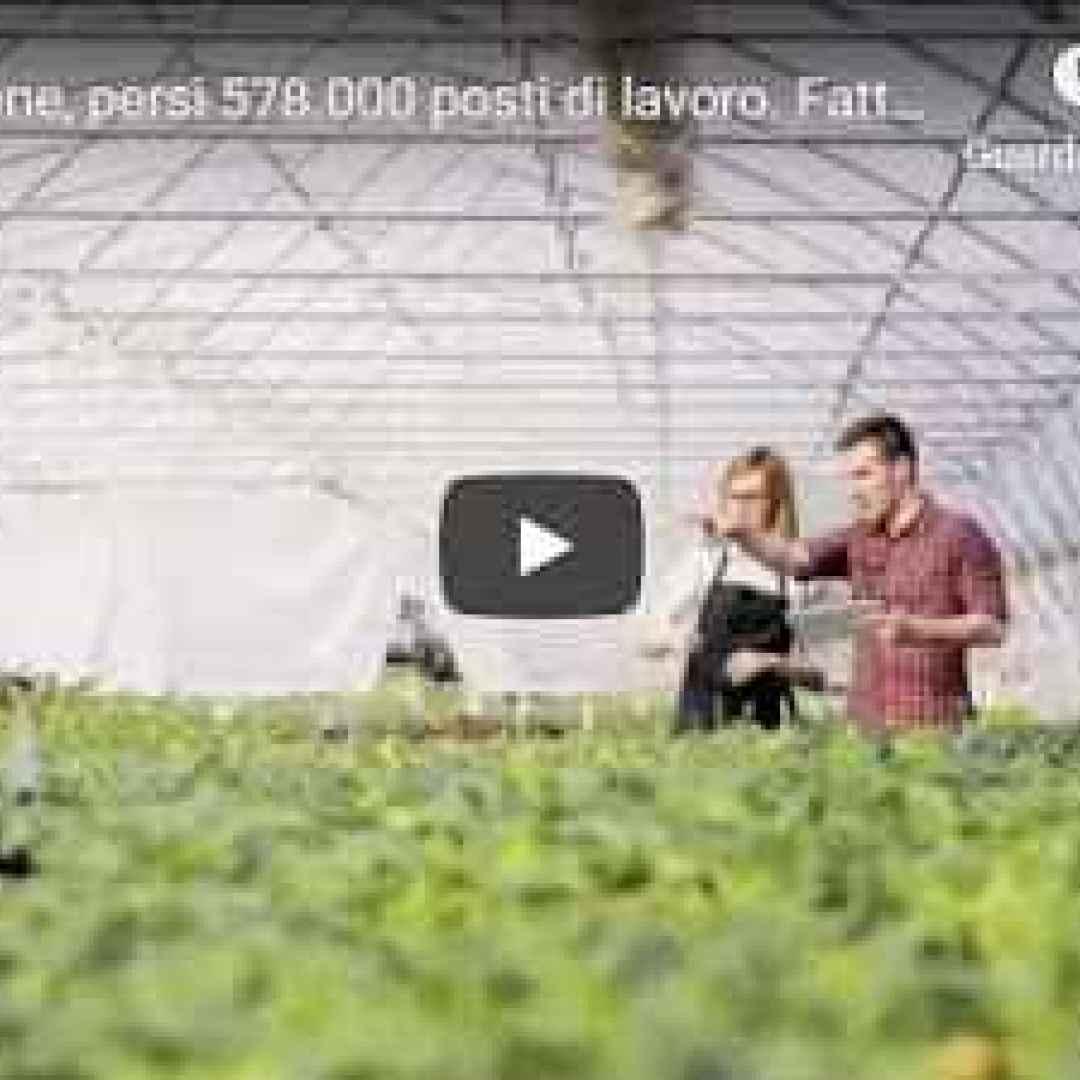 lavoro video cronaca covid italia