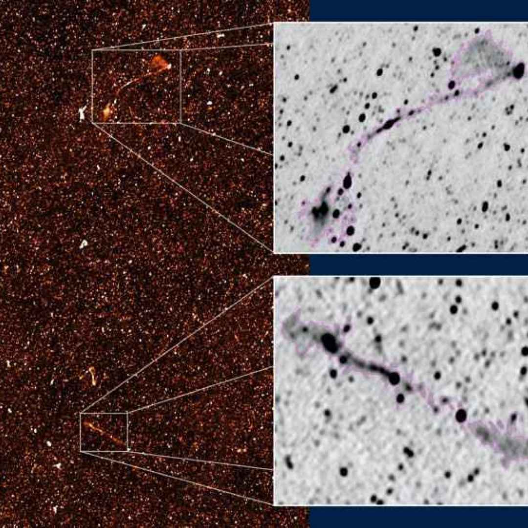 meerkat  galassie  radiogalassie