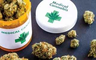 Medicina: cannabis  cannabis terapeutica