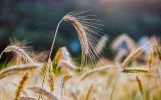 agricoltura  cereali  cibo  letture