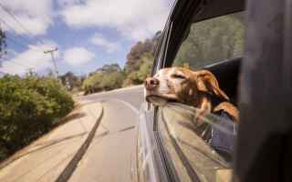 Viaggi: viaggi  cane