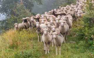 Religione: apostolo  discorso sui pastori  gregge