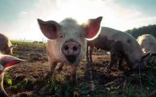 <h2>Perché allevare un maiale da alimentazione?</h2><br />Molte persone presumono che se vuo