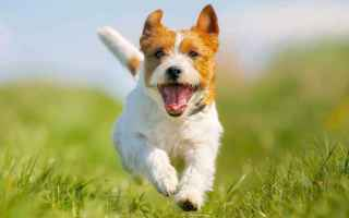 Animali: dog training basic pet training tips