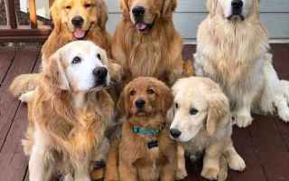 Animali: Qualities Every Great Family Dog Should Have